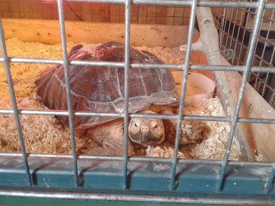 Zoo de Falardeau: Belle tortue
