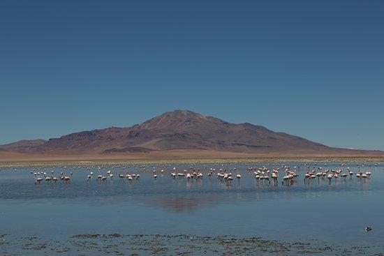 San Pedro de Atacama, Chile: Tour Salar de Tara