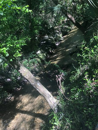 Sweetwater Wetlands Park: A very big alligator!
