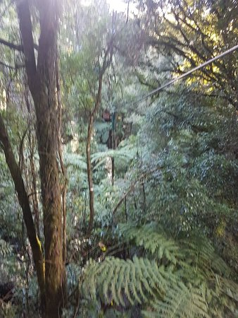 Rotorua Canopy Tours: 20180706_142528_large.jpg