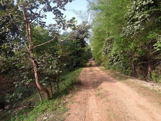 jungle road adjacent to Jungle Home , Pench National Park