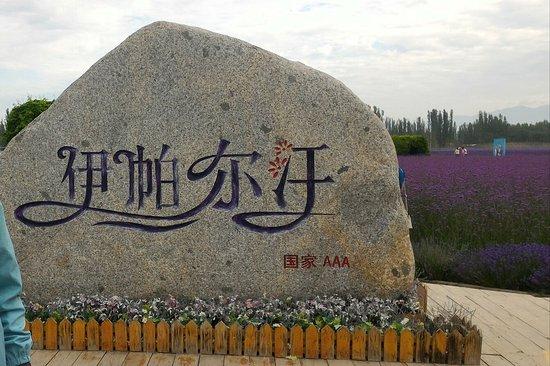 Yining County, China: 新彊 伊寧 70團薰衣草基地 (伊帕尔汗) 薰衣草觀光園