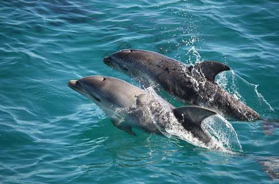 3-timers Dolphin and Seal Sightseeing...