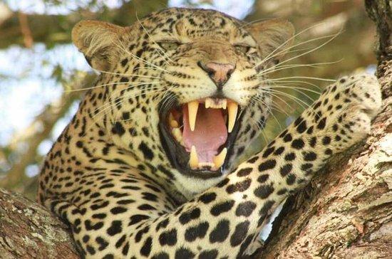 Tanzania Luxury Tented Camp Safari