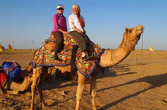 1 Night Camel Safari Tour In Jodhpur