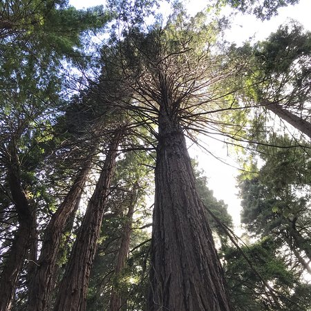Muir Woods National Monument Mill Valley 2018 All You