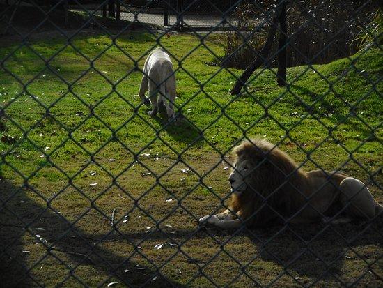 Mogo Zoo照片