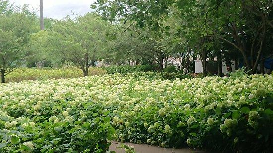 Sagamihara Kita Park