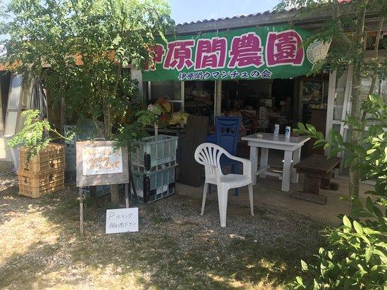 Ibaruma Farm Fruits Chokubaijo