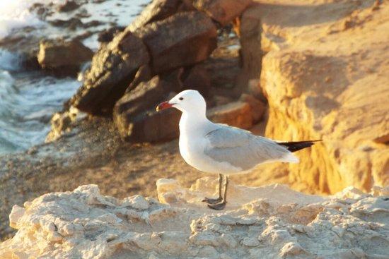 卡拉科莫特沙滩照片