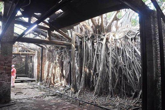 安平树屋照片