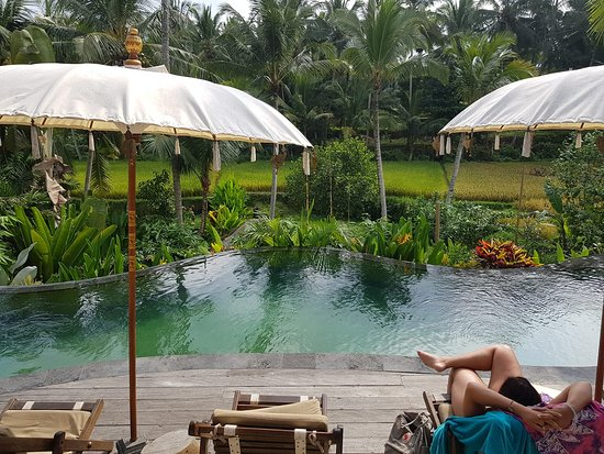 Calma Ubud: Infinity pool with a rice terraced view