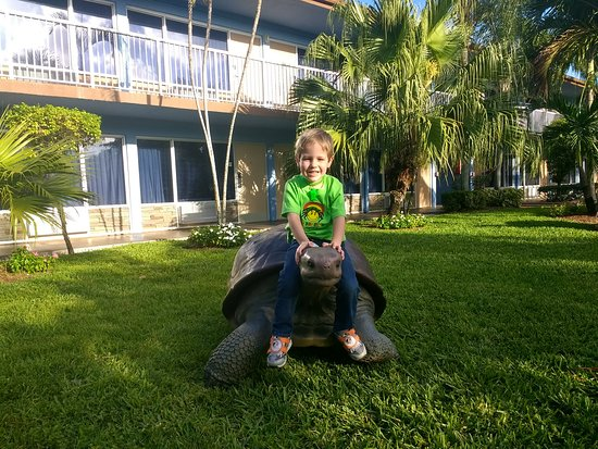 Rodeway Inn & Suites Fort Lauderdale Airport Port Everglades Cruise Port: Kids loved the well kept courtyard