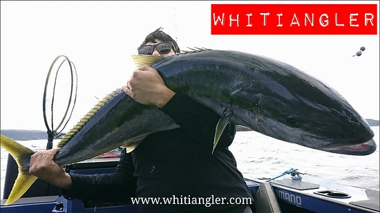 Whitianga, Yeni Zelanda: Whitiangler - The Ultimate New Zealand Fishing Adventure!  Come and chase the mighty Kingfish!