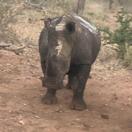 Makutsi Safari Springs照片