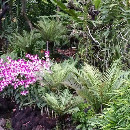 新加坡植物园照片