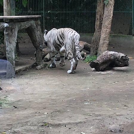 Bali Zoo Foto