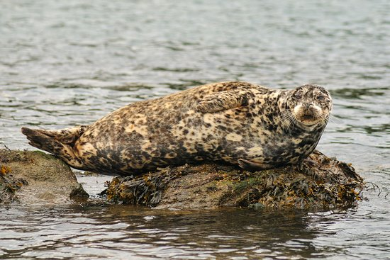 EcoCruising: Hello from a harbour seal