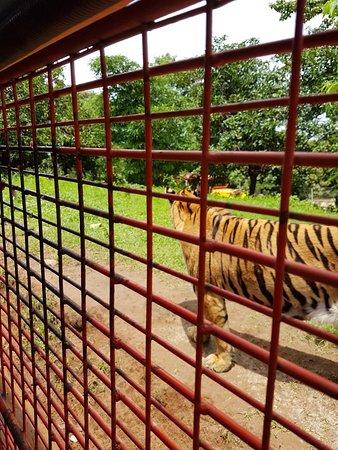 Zoobic Safari 사진