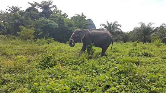 Krabi Elephant Sanctuary: Walk with the elephants