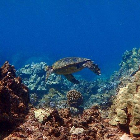Shoreline Snorkel – fénykép