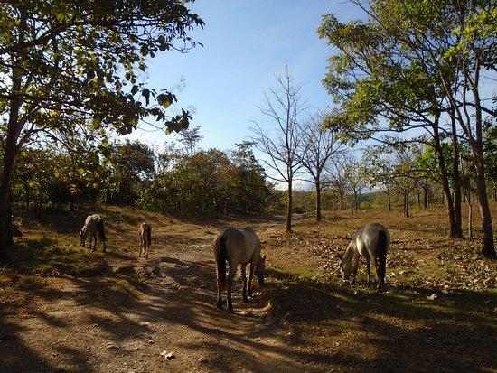 Caldera, Panama: Nature around