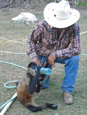 Caldera, Panama: Farmer and his monkey pet