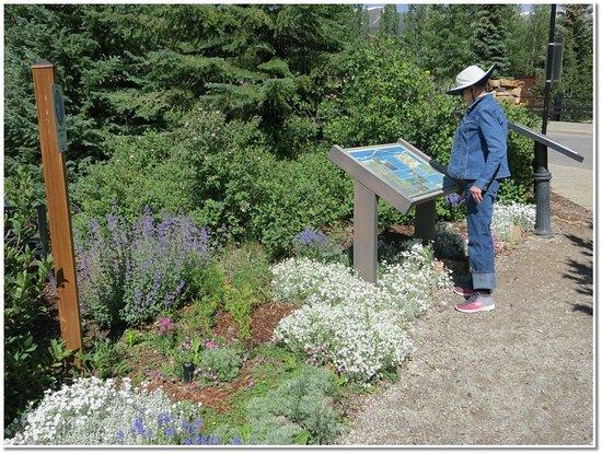 Breckenridge Alpine Garden