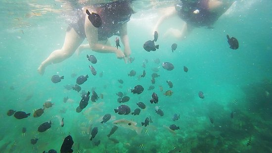 Crimson Resort and Spa, Mactan: Snorkeling