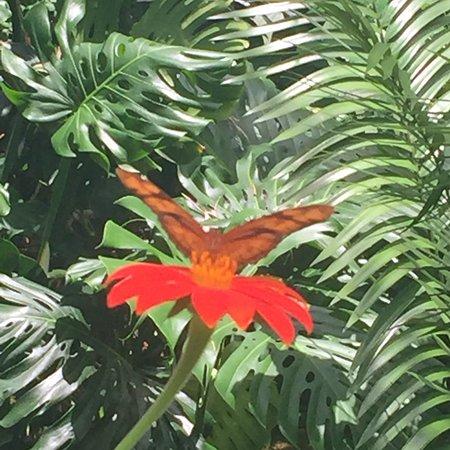 Florida Museum of Natural History照片