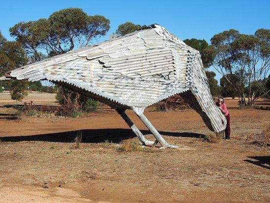 Patchewollock, Australia: Pet hen
