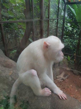免排队:吉隆坡吉隆坡塔迷你动物园门票照片