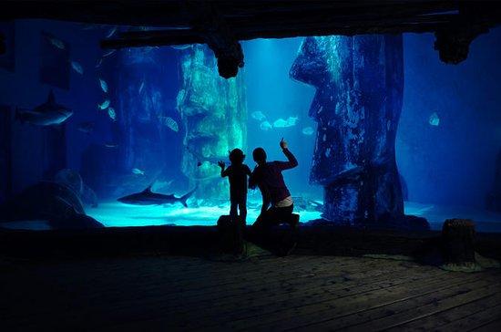 Keine Warteschlange: Sea Life London Aquarium