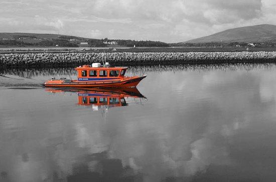 Dingle Bay Speed Boat Tours og...