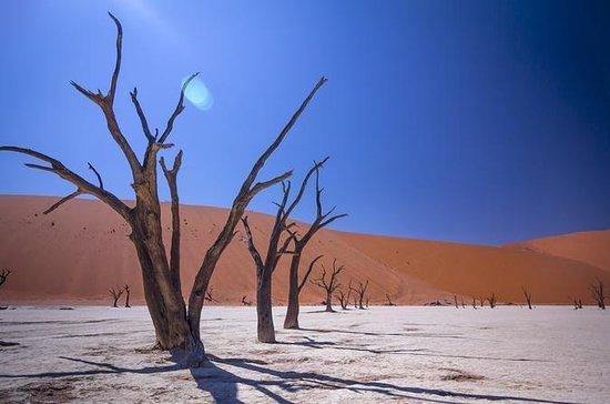 Namibische Safari