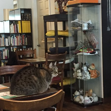 Cat Cafe Montreal