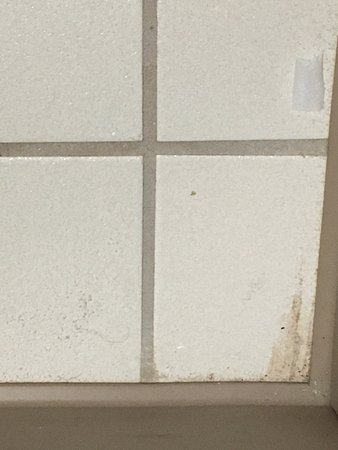 Toilet Paper & Pubic Hair on Floor