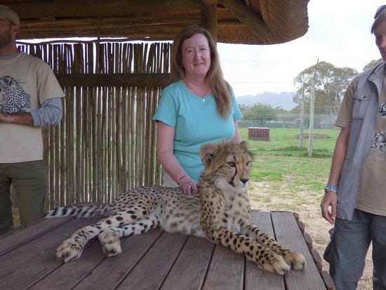 Skaris Touring: Baby cheetah.