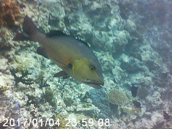 Werner Lau Diving Centers