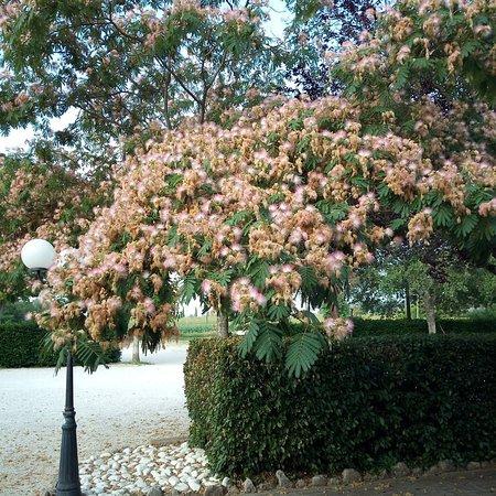Papiano, Taliansko: Giardino