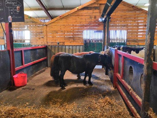 Foto de Farmer Teds Adventure Farm