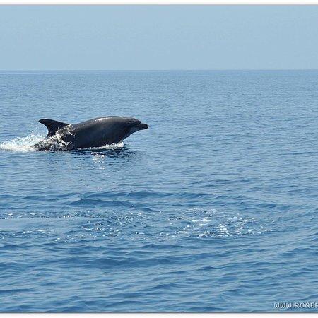 Фотография Wildwatch Algarve