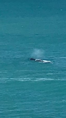 Nullarbor, Australien: photo of one of the whales