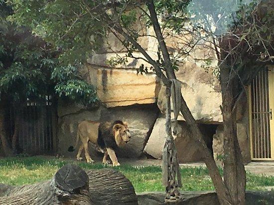 布拉格动物园照片
