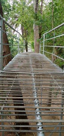 Bhawanipatna, Hindistan: The greeny way