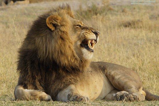 Maun, Botswana: I enjoy basking in the sun