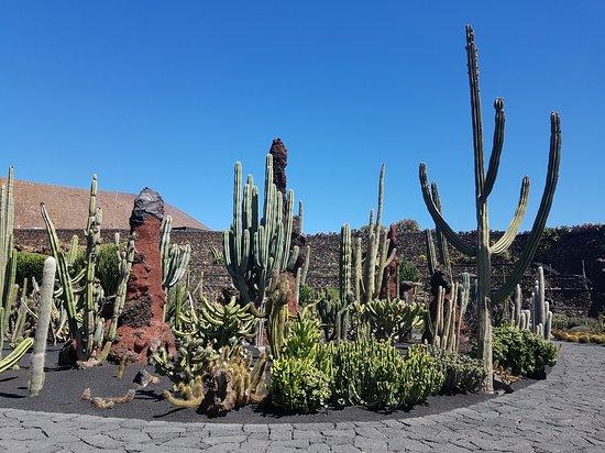 Jardin de Cactus照片