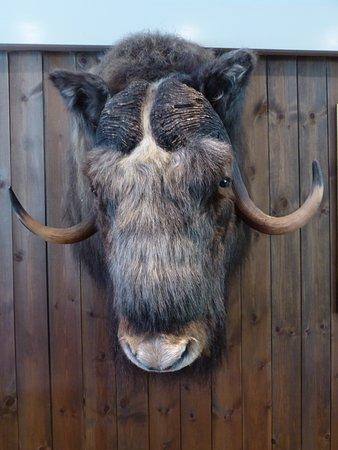 Frich's Kafeteria: un bœuf musqué