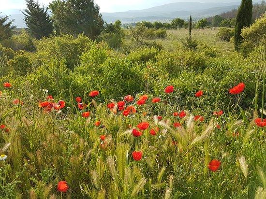 Tuchan, Frankreich: Veloc-Tauch