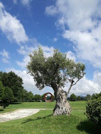 Parco della Biodiversita Mediterranea照片